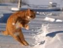 dancing-animal-02