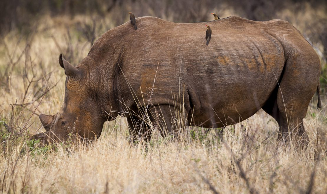 Why the Madikwe Game Reserve is a must-see for any birder