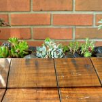 REPOTTING SUCCULENTS IN SPRING