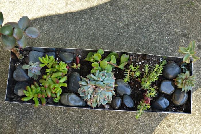 add new succulents