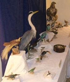 Birds 8-30-09 Joeckel