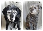 Homeless pets need fur-ever, loving homes