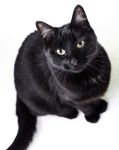 """Caturday in """"Mew"""" Woodstock: Black Cat Myths and Superstitions Oct. 16"""