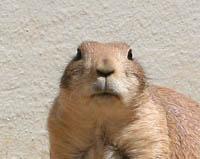 groundhog-sm