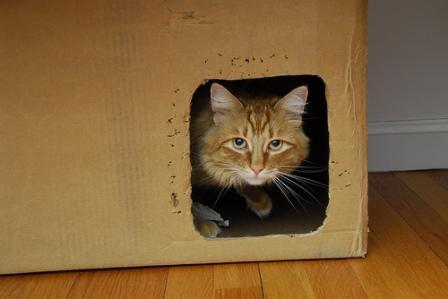 peeing in box cat madmikesamerica