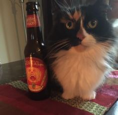 Mad Money Cat with a beer