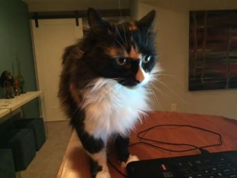 Mad Money Cat - Money Management