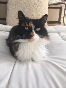 Mad Money Cat DIY attitude