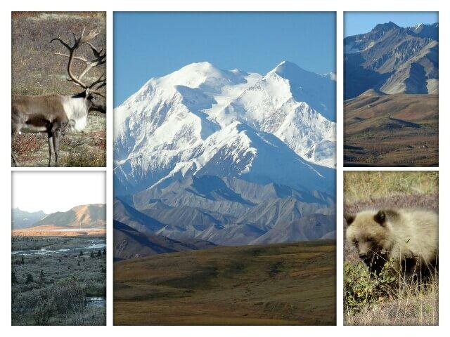 """Impressionen von der ganztägigen Bustour im """"Denali National Park2 (Alaska, USA)"""