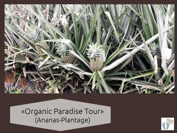 Costa Rica: Tag 10: Puerto Viejo de Sarapiquí: Besuch einer organischen Ananas-Plantage 3
