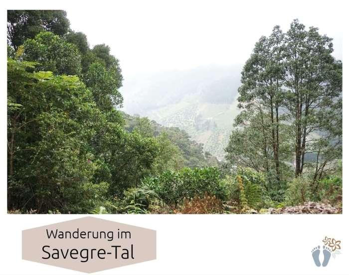 Costa Rica: Tag 13: Los Quetzales National Park 4