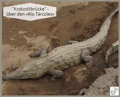 "Spitzkrokodile bei der ""Krokodilbrücke"" über dem «Río Tárcoles» {Reisetagebuch Costa Rica: Tag 18}"