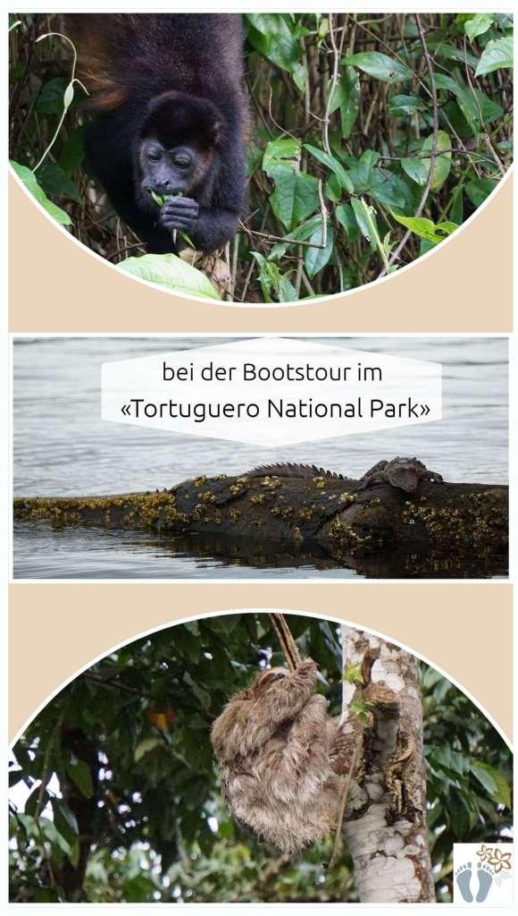 Brüllaffe_Krokodil_Faultier - bei der Bootstour im «Tortuguero National Park» entdeckt {Costa Rica}