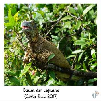 beim «Baum der Leguane» {Costa Rica 2017}