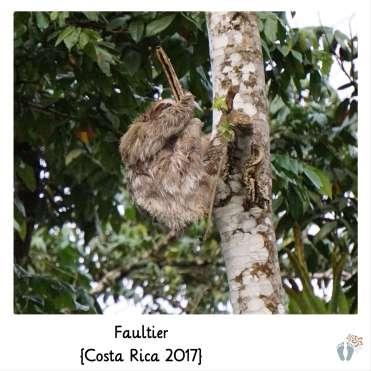Faultier {Costa Rica 2017}