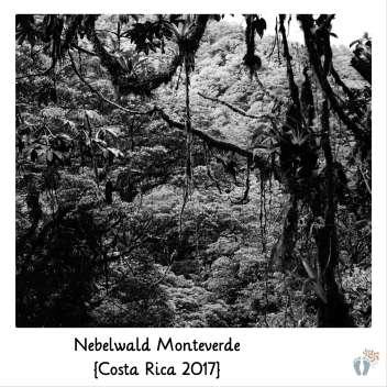 Wanderung im «Nebelwald Monteverde» {Costa Rica 2017}
