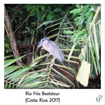 Vogelbeobachtung bei der Bootstour den «Río Frío» entlang {Costa Rica 2017}