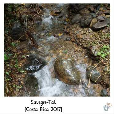 kleiner Flusslauf im «Savegre-Tal» {Costa Rica 2017}