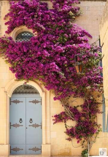 Reisetagebuch Malta: Tag 02: mit Blumen verzierte Hausmauer in «Mdina»