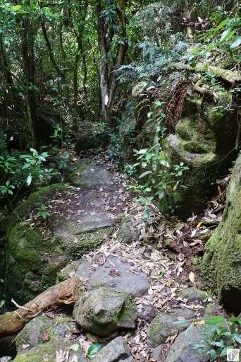 Küstenwanderung: Wanderweg {Reisetagebuch «Roadtrip durch Neuseeland mit dem Bus»: «Diamond Harbour»}