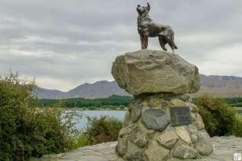 Collie Dog Monument (Schäferhund-Statue) {Reisetagebuch «Roadtrip durch Neuseeland mit dem Bus»: Tekapo}