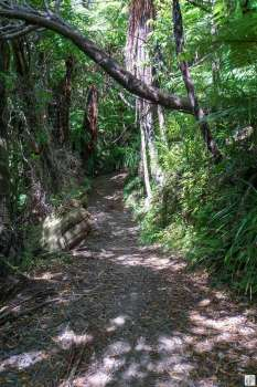 Wanderung «Queen Charlotte Track»: Wanderweg {Reisetagebuch «Roadtrip durch Neuseeland mit dem Bus»: «Marlborough Sounds»}