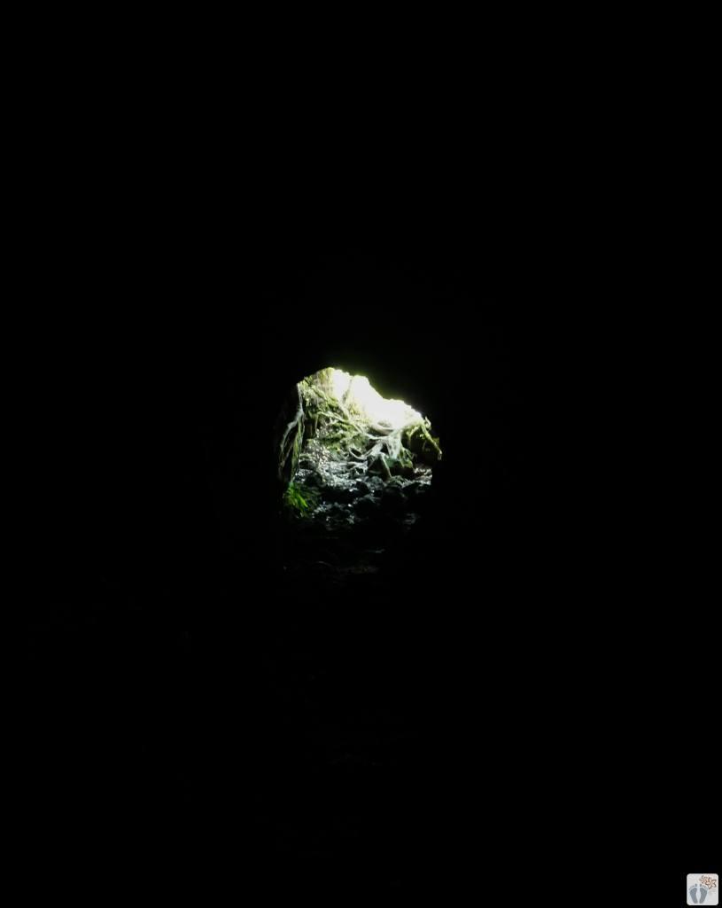 Rangitoto Island: Lava Caves {Reisetagebuch «Roadtrip durch Neuseeland mit dem Bus»: Auckland}