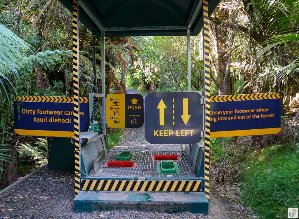 Waiau Kauri Grove: Reinigungsstation für Schuhe {Reisetagebuch «Roadtrip durch Neuseeland mit dem Bus»: Northern Coromandel}