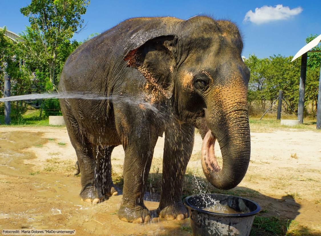 Wildlife Rescue Center and Elephant Refuge in Phetchaburi - Elefanten duschen (Reisetagebuch «Thailand als Alleinreisende ohne Roller entdecken»)