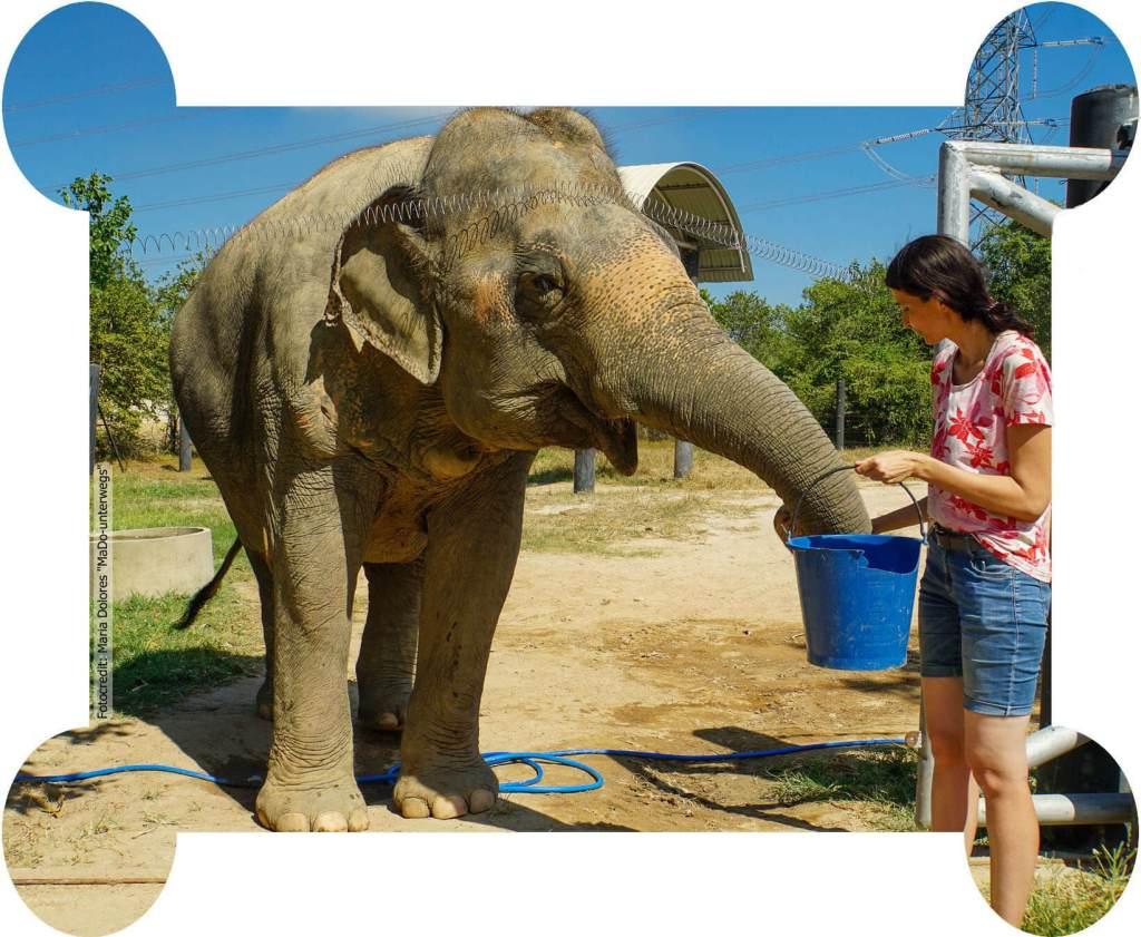 Wildlife Rescue Center and Elephant Refuge in Phetchaburi - Elefanten füttern (Reisetagebuch «Thailand als Alleinreisende ohne Roller entdecken»)