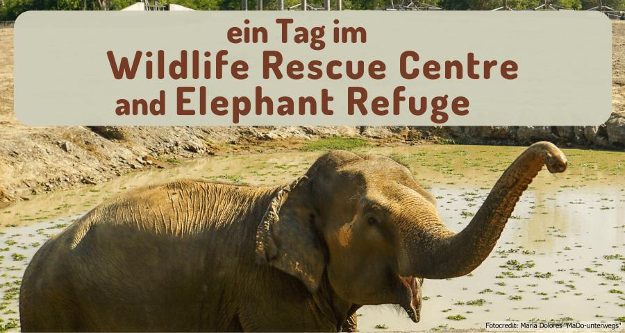 Wildlife Rescue Center and Elephant Refuge in Phetchaburi (Reisetagebuch «Thailand als Alleinreisende ohne Roller entdecken»)