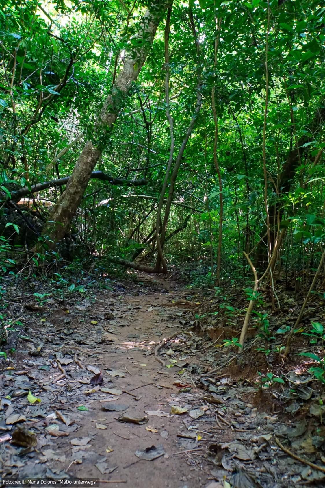 Pfad des Nature Trails auf Koh Hong (Hong Island) in der Andamanensee (Reisetagebuch «Thailand als Alleinreisende ohne Roller entdecken»)