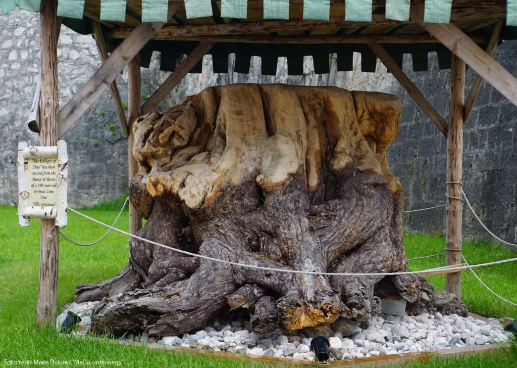 Festung Hohensalzburg: Reste einer 200 Jahre alten Linde im Burghof [10 Tage Roadtrip Salzburg]