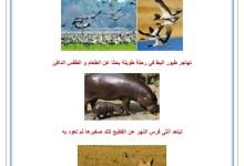 Photo of محور التنقل : حاجة الحيوانات الى التنقل – دوافع الحيوان للتنقل
