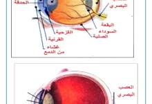 Photo of عجائب العين : تركيبة العين و وظيفة كل عضو