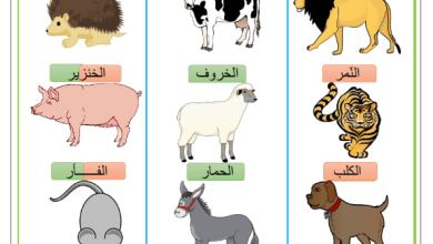 Photo of الحيوانات اللاحمة و العاشبة و الكالشة – التغذية عند الحيوانات ( صور )