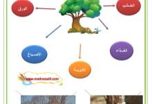 Photo of النباتات التلقائية و فوائد النباتات و الأشجار