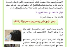 Photo of الرفق بالحيوان – حماية الحيوانات – حقوق الحيوانات