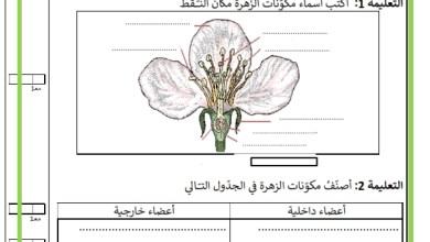 Photo of تقييم السداسي الثاني – مادة الايقاظ العلمي- السنة السادسة