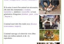 Photo of les droits des animaux
