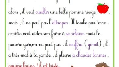 Photo of production écrite – 3 ème  année – la mésaventure de bruno