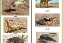 Photo of الحيوانات الصحراوية – حيوانات الصحراء