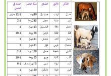 Photo of الحيوانات الولودة الذكر و الانثى و اسم الصغير و مدة الحمل