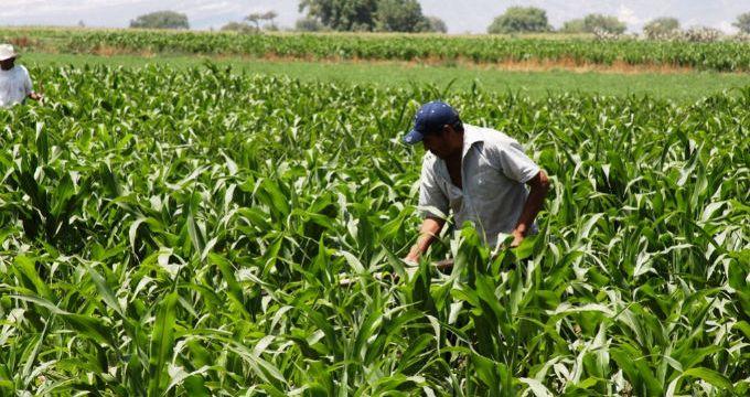 Madrid davía libre a un mercado estable de agricultores