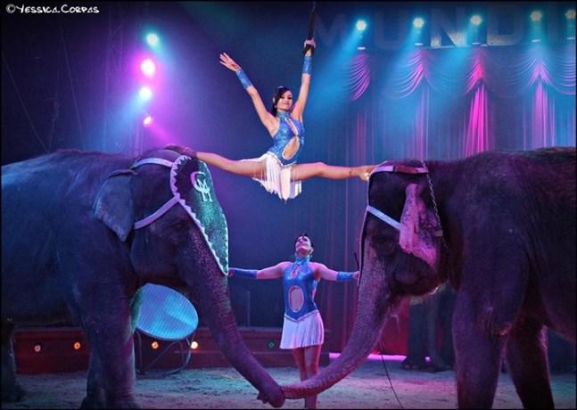 Los Elefantes sagrados que vivían cien años