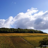 Buisson Vineyards