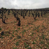 L'Horizon old vineyards -NB