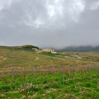 house-and-vinyd-in-fog