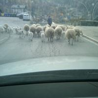 on the road in Arvier, Valle d'Aosta 11.29.11