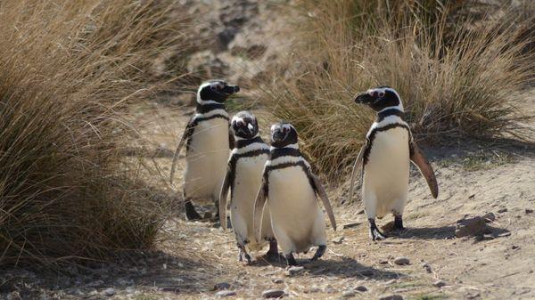 Fauna Puerto Madryn
